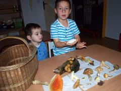 Učíme se o houbách a lese