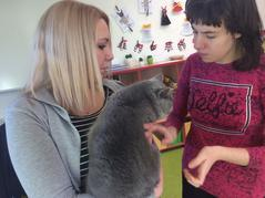 Kočičí návštěva